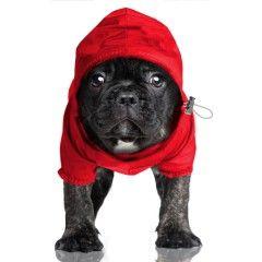 Coupe-Vent Preppy Rouge pour chiens - Milk&Pepper