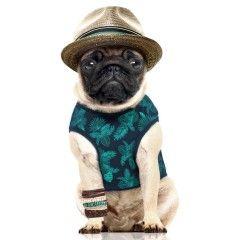 T-Shirt Cuba pour chiens - Milk&Pepper