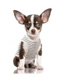 T-Shirt Raoul rayé écru et gris anthracite pour chiens - Milk&Pepper