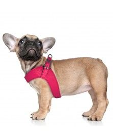 Dandy Parachute Harness for dogs - Milk&Pepper