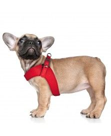 Dandy Harness Red for dogs - Milk&Pepper