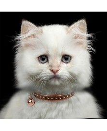 Copper Vega collar for cats - Milk&Pepper