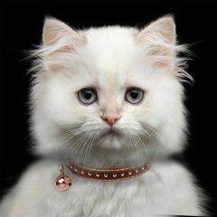 Collier Vega cuivre pour chats - Milk&Pepper