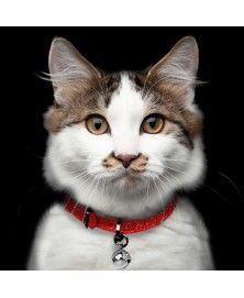 Cat Collar Stardust Red Milkandpepper