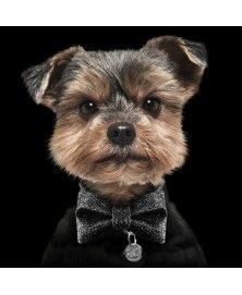 Black bow tie for dog Milkandpepper