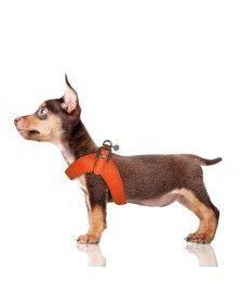 Harnais Parachute Dandy pour chien - Milk&Pepper