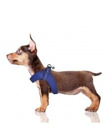 Harnais Parachute Dandy bleu pour chien - Milk&Pepper