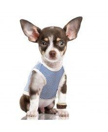 T-Shirt Jerry pour chien Milk&Pepper