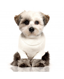 Meow dog sweater - Milk&Pepper