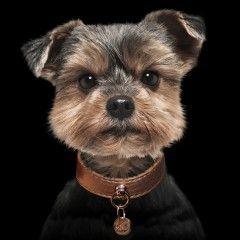 Collier Shine Cuivre pour chiens - Milk&Pepper