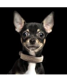 Collier Boréal Taupe pour chiens - Milk&Pepper