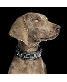 Collier Boréal Black pour chiens - Milk&Pepper