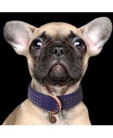 Collier Amaya Indigo pour chiens - Milk&Pepper