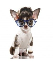 T-Shirt Pool Bleu pour chiens - Milk&Pepper