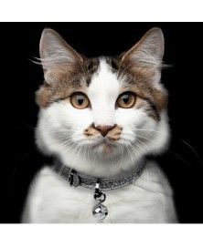 Cat Collar Stardust Titan - Milk&Pepper
