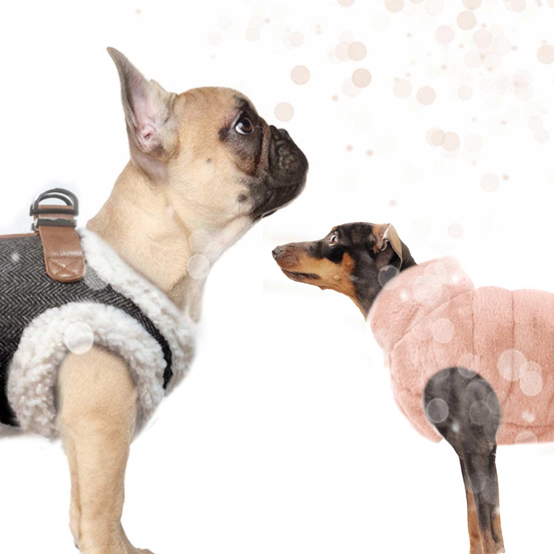 Dog's Fashion