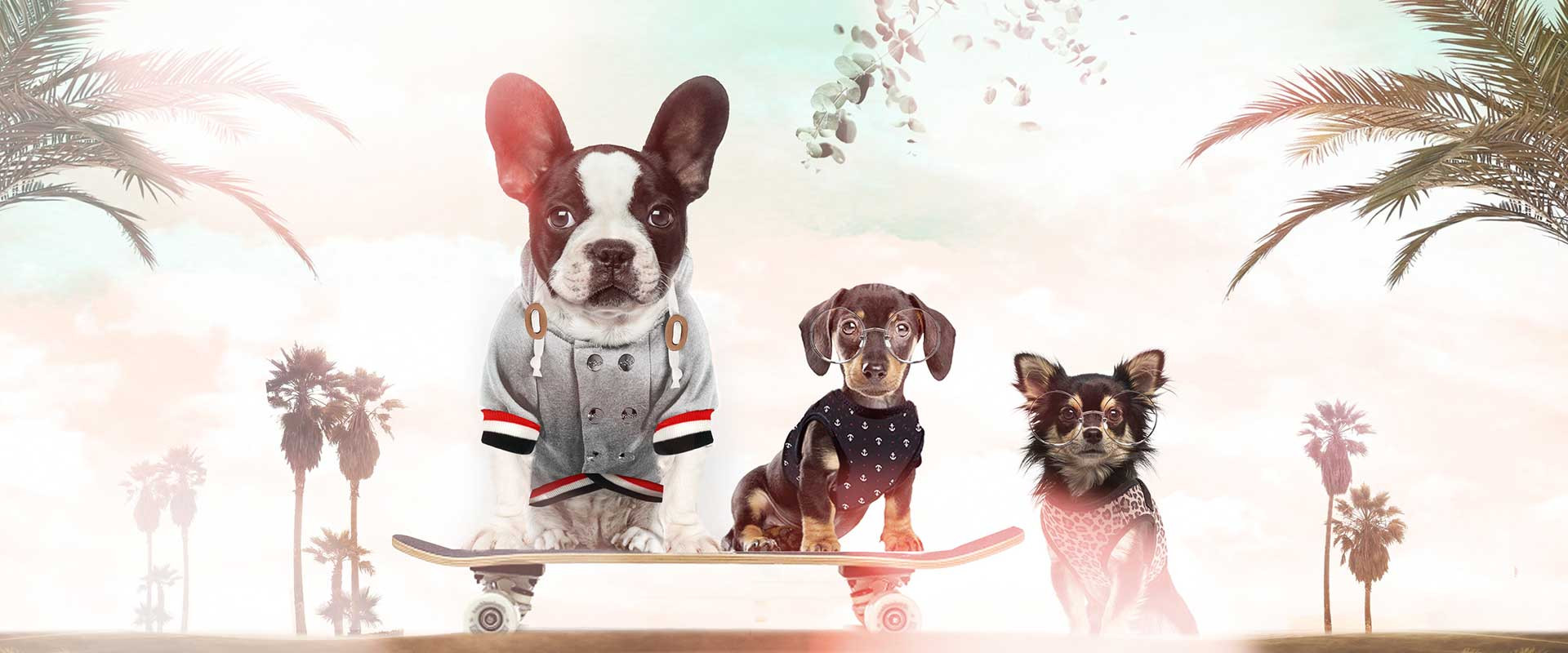 Milk & Pepper, Fashion And Accessories For Dogs & Cats - Fashion Summer 2020