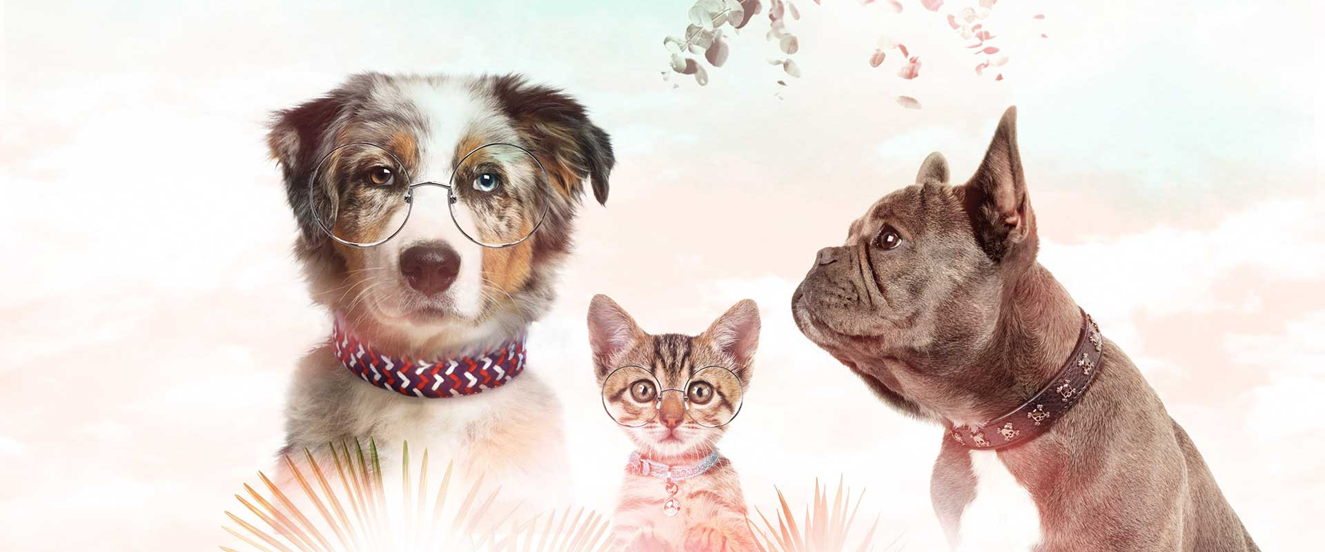 Milk & Pepper, Fashion And Accessories For Dogs & Cats -  Accessories Summer 2020